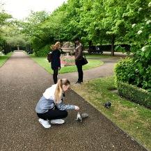 Kesyjä oravia ihan ilman pähkinöitä The Regent's Parkissa.